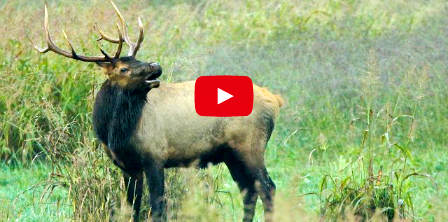 Boxley Valley Arkansas Map.Tips For Elk Viewing In Boxley Valley By The Arkansas Game Fish